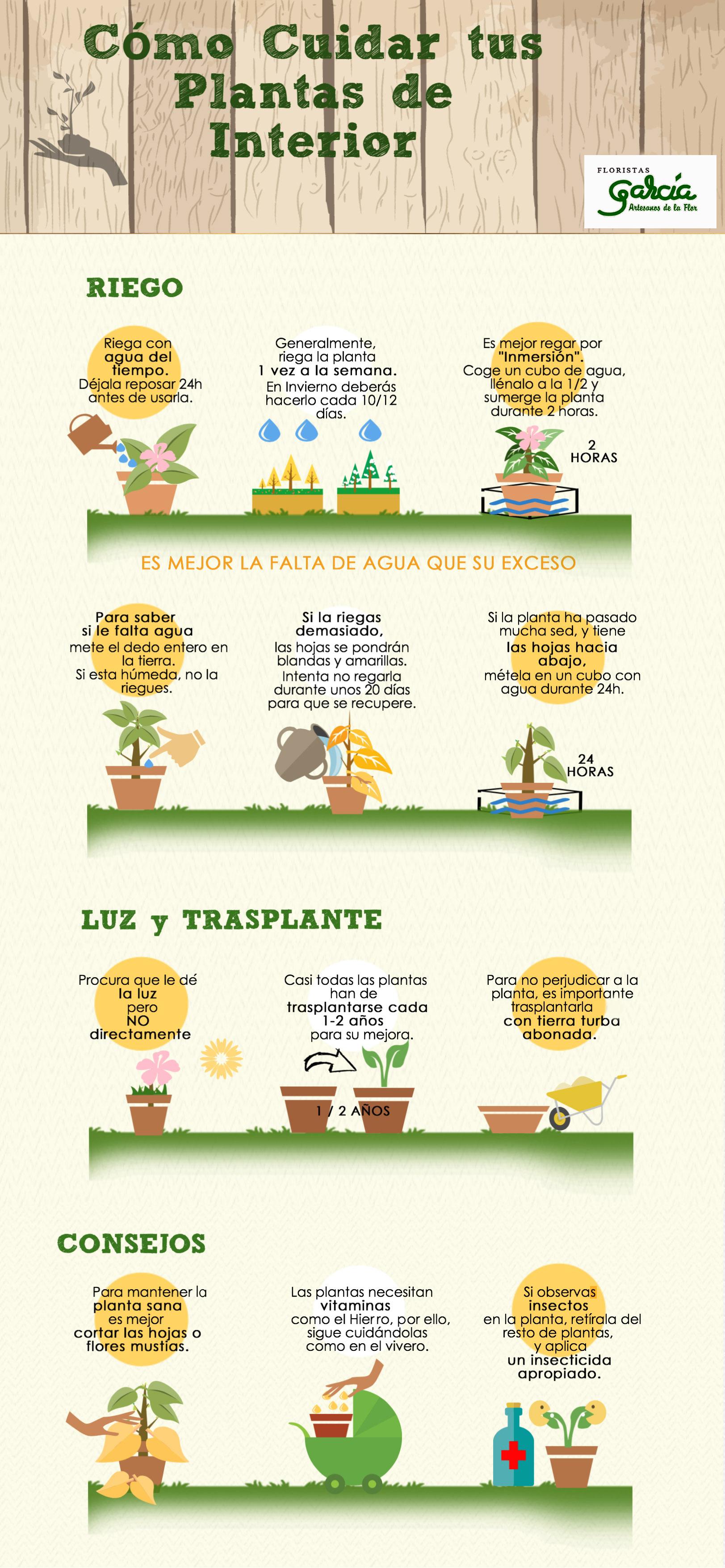 6 consejos para proteger tus rosas de las plagas y las - Enfermedades de las plantas de interior ...